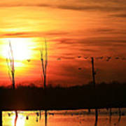 Geese Flying Into The Sunset Poster