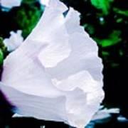 Gentle Floral Poster