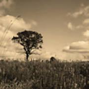 Gentle Landscape Poster