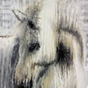 Gentle White Horse Poster