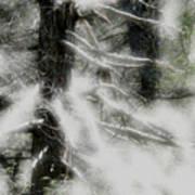 Georgia Pines Poster