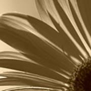 Gerber Flower Poster