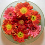 Gerbera Daisies - From Above Poster