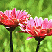 Gerbera Daisies To Brighten Your Day Poster