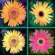 Gerbera Daisy Collage In Square Poster