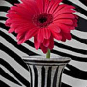 Gerbera Daisy In Striped Vase Poster