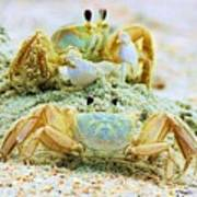 Ghost Crabs Poster