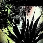 Giant Agave Poster