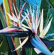 Giant Bird Of Paradise Poster