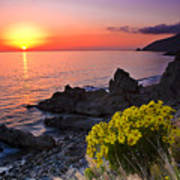 Giant Coreopsis Sunset 2 Poster