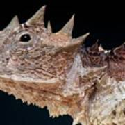 Giant Horned Lizard Poster