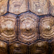 Giant Tortoise Carapace Poster