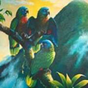 Gimie Dawn 1 - St. Lucia Parrots Poster