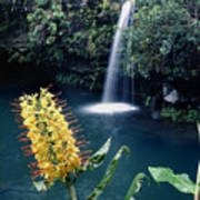 100638-ginger Lily And Hawaiian Waterfall  Poster