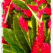 Ginger Plants On Kauai Poster