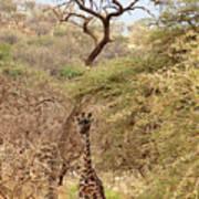 Giraffe Camouflage Poster