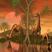 Giraffe Family By John Junek Poster
