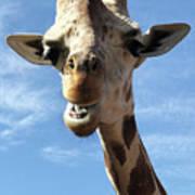 Giraffe Greeting Poster