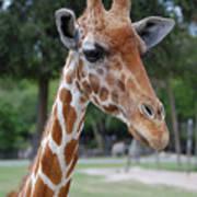 Giraffe Youth Poster