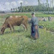 Girl Tending A Cow In Pasture Poster by Camille Pissarro