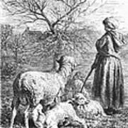 Girl Tending Sheep Poster