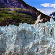 Glacier Bay Poster