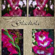 Gladiola Collage Poster