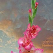 Gladiola Sunset Poster