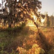 Glorious Sunrise At The Oak Tree Poster