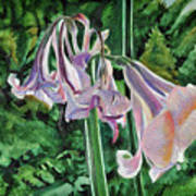 Glowing Amaryllis Poster