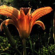 Glowing Day Lily Poster