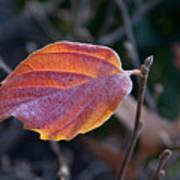 Glowing Leaf Poster
