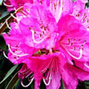 Glowing Pink Poster