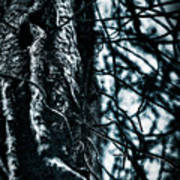 Gnarled Vines Surround A Tree Poster