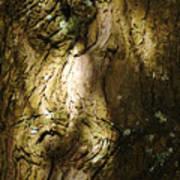 Gnarly BC Tree Poster