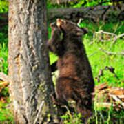 Go Climb A Tree Poster