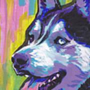 Go Husky Poster