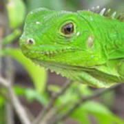 Go Iguana Green 2 Poster