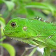 Go Iguana Green Poster
