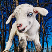Goat High Fashion Runway Poster