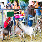 Goats At County Fair Poster