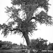 Goddess Tree 2 Poster by Matthew Angelo