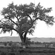 Goddess Tree 3 Poster by Matthew Angelo