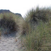 Gold Beach Oregon Beach Grass 5 Poster