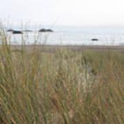 Gold Beach Oregon Beach Grass 7 Poster