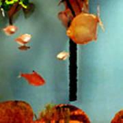Gold Fish Life Poster