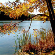 Golden Autumn Lake Poster
