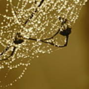 Golden Dewdrops Poster