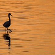 Golden Egret Poster