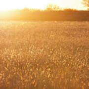 Golden Field Poster